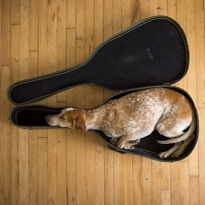 Miscellaneous pics - musician dog