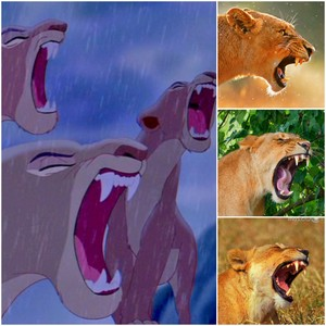 Realistic lionesses