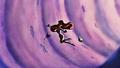 Walt Disney Screencaps - Sebastian, Princess Ariel & Flounder - walt-disney-characters photo