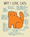Why I Love Cats  - cats fan art