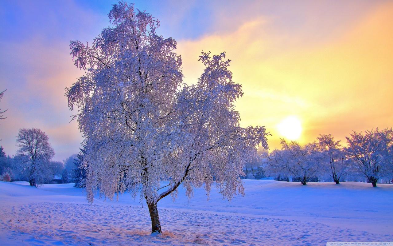 зима природа фото картинки