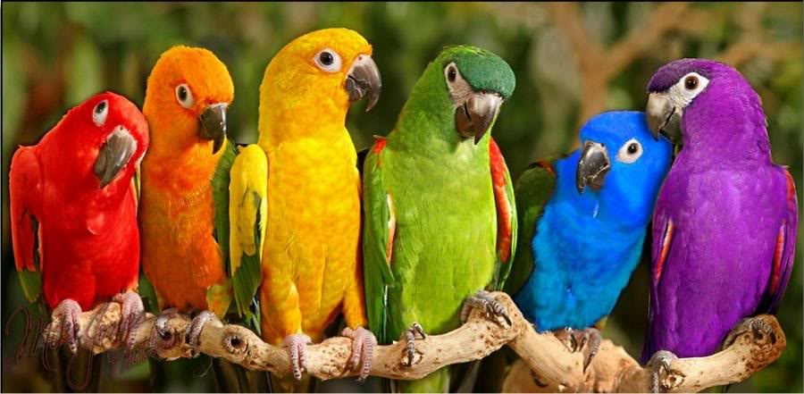 color of the قوس قزح birds