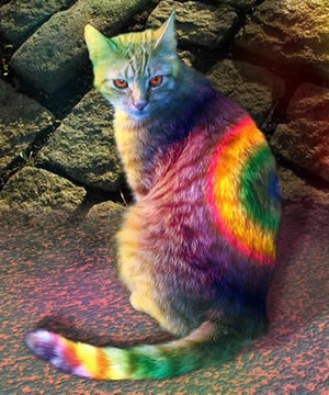colorful cat 1