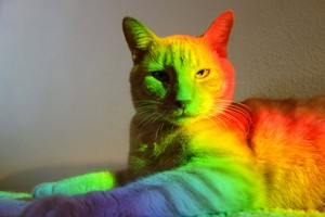 colorful cat 2