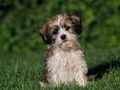 doggie my pup