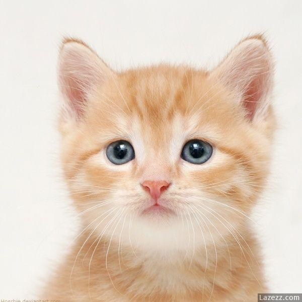Pretty Cats Images Pretty Cats Wallpaper And Background Photos