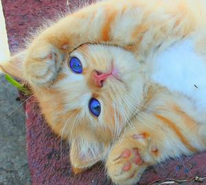 pretty-cats