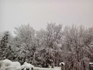 winterwonderlabd