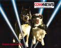 CCNN Hires Crime Reporters. - dogs photo