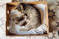 Cat and Kittens  - cats photo