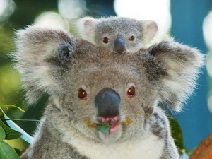 Happy Australia Tag My BFFF's (Best Fanpop Friends Forever)