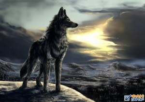 Lonely serigala, wolf