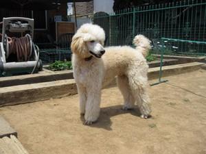 My Dog Tango