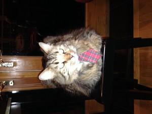 My auntie's cat.