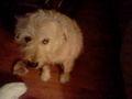 My dog, Hank - dogs fan art