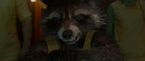 Guardians of the Galaxy 바탕화면 containing a common raccoon and a raccoon entitled Rocket Raccoon: I told 당신 I had a plan