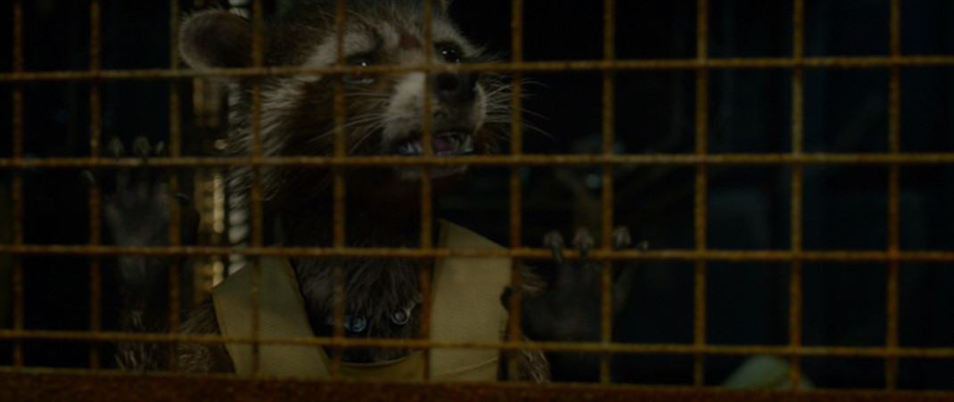 Rocket Raccoon: Quill?