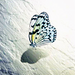 Spread your wings! - daydreaming icon