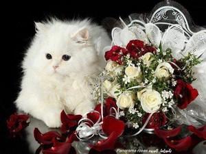 WHITE Gatti