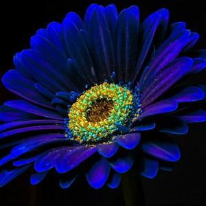 flower-flowers