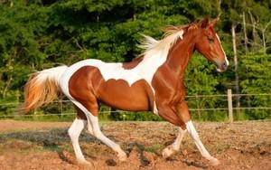horseeeeeee