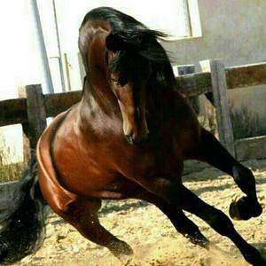 horseeeeeeeeeee