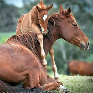 horseeeeeeeeeeeee