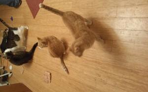 kitties rule this house