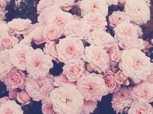 rosessdsdj
