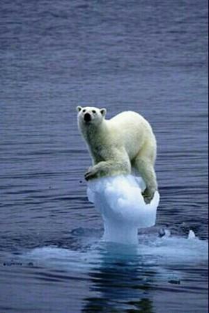 the earth-bear