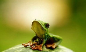 the earth-frog