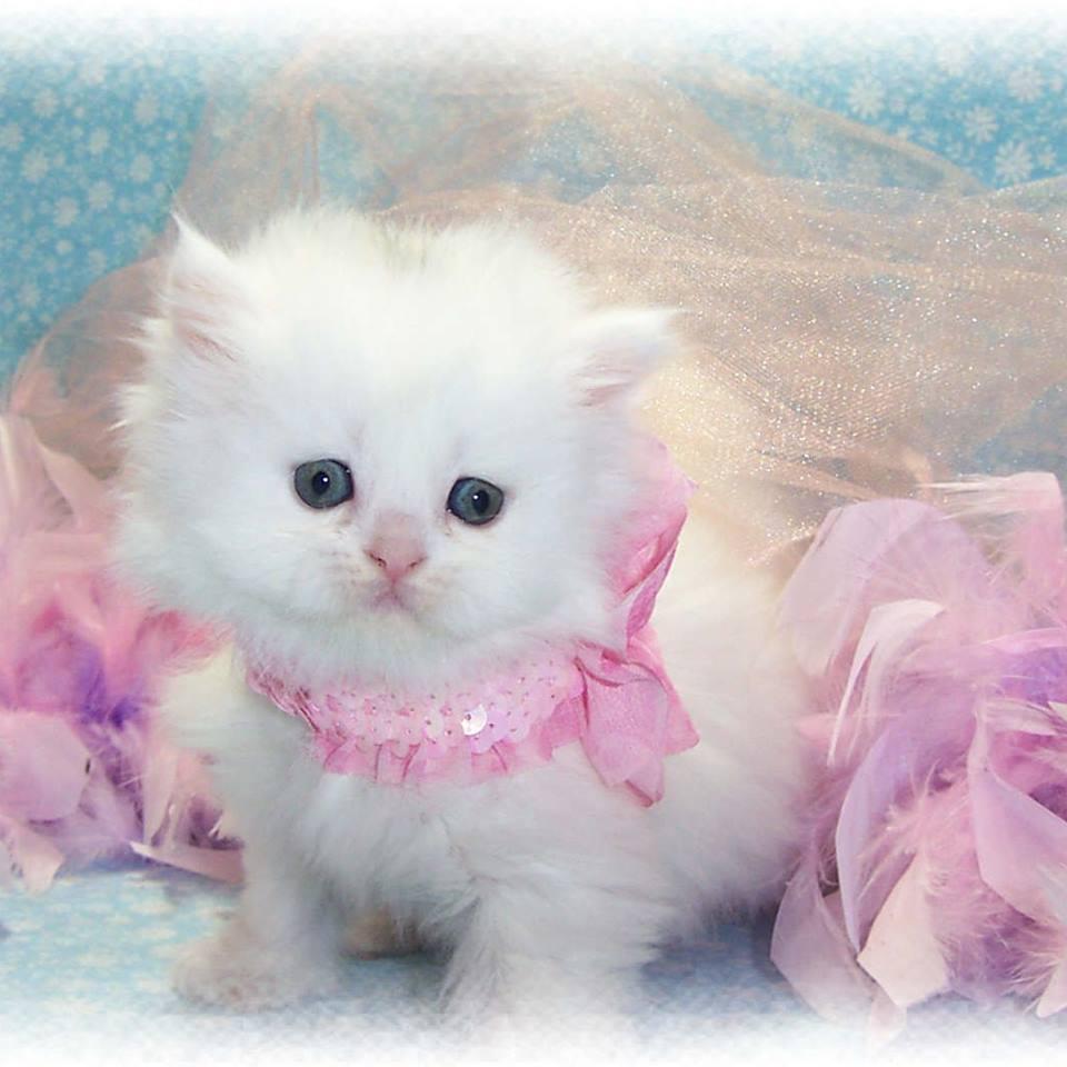 Cute Gatinhos Gatos Gatos Wallpaper 38179611 Fanpop