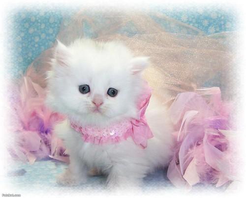 Kätzchen Hintergrund called CUTE Kätzchen Katzen