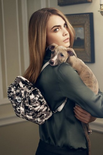Cara Delevingne वॉलपेपर containing an italian greyhound titled Cara Delevingne