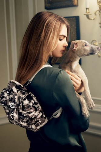 Cara Delevingne Обои containing an italian greyhound titled Cara Delevingne