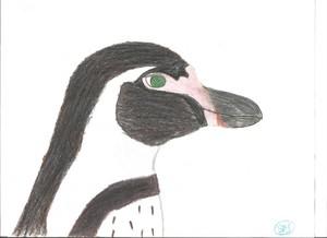 Juarez the Humboldt pinguïn