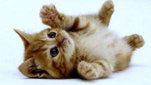 LIL kittens kucing