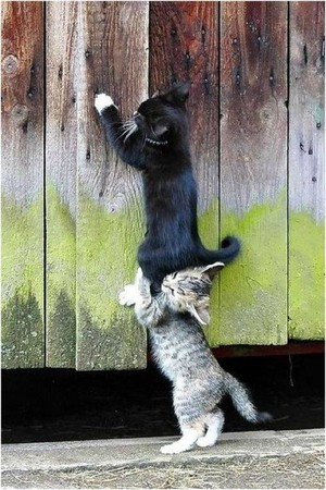 Meow ~.~ ❤ ❥