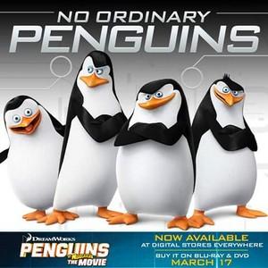 No ordinary penguins.