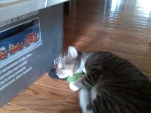 my cat, 2009