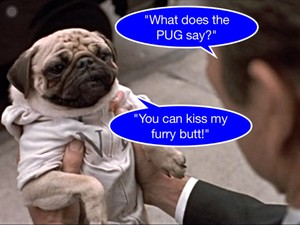 Frank the Pug tells Kay like it is!