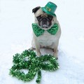 Happy St. Paddy's Day - saint-patricks-day photo