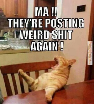 When someone post something funny...