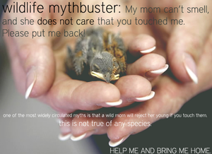 Wildlife Mythbuster