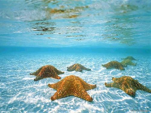 Underwater upigaji picha karatasi la kupamba ukuta titled underwater