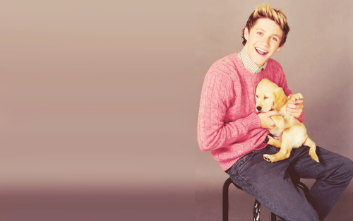 Niall Horan wallpaper titled                Niall Horan ♥