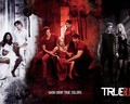 Season 7 - true-blood wallpaper