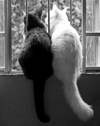 Kucing wallpaper containing a tom a kitten and a cat titled black n white