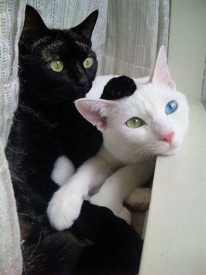 BLACK N WHITE CATS
