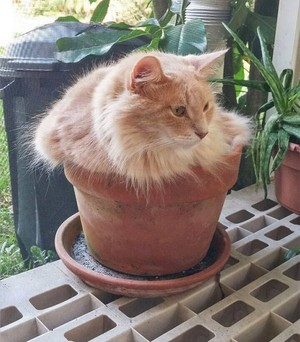 mèo IN THE POTS